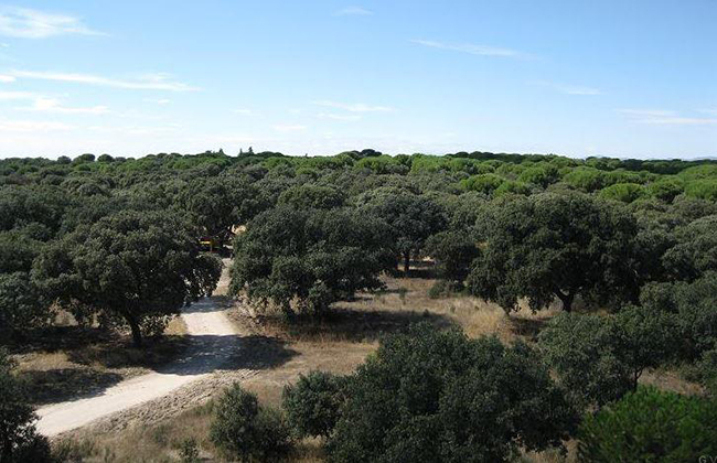 servicios de mantenimiento integral en bosques de Madrid